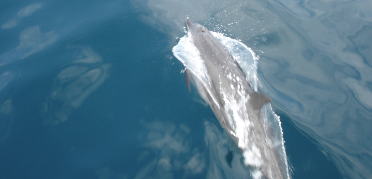 Dolphins came to play round the Catathaï 34's bows. Always a big moment!