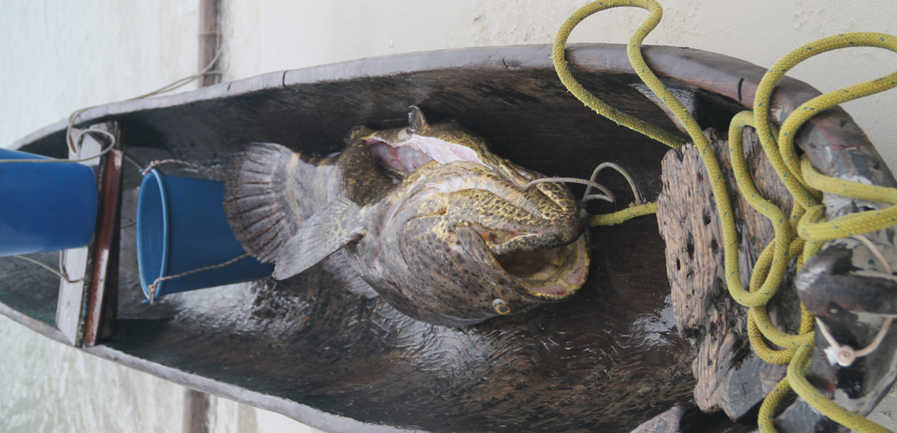 The Caribbean Sea was particularly generous... What a catch!