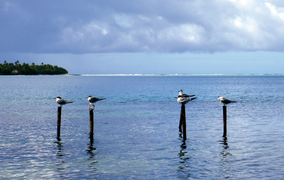 Chronicle around the world : Leeward Islands