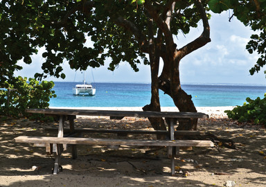 Nemesis : the pleasure of a sabbatical year in the West Indies